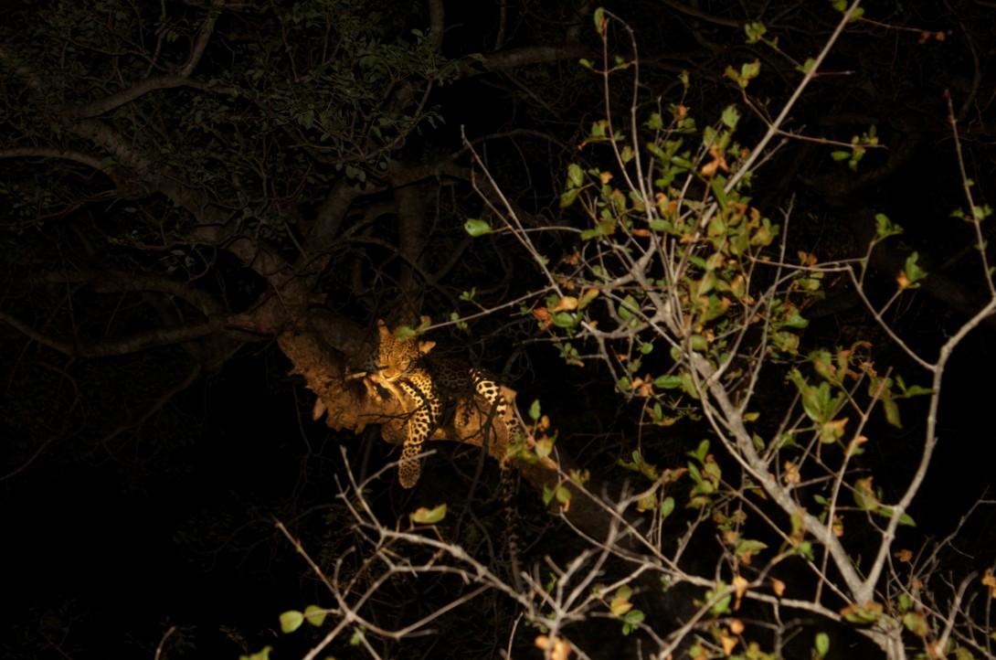 Safari, en opplevelse for livet