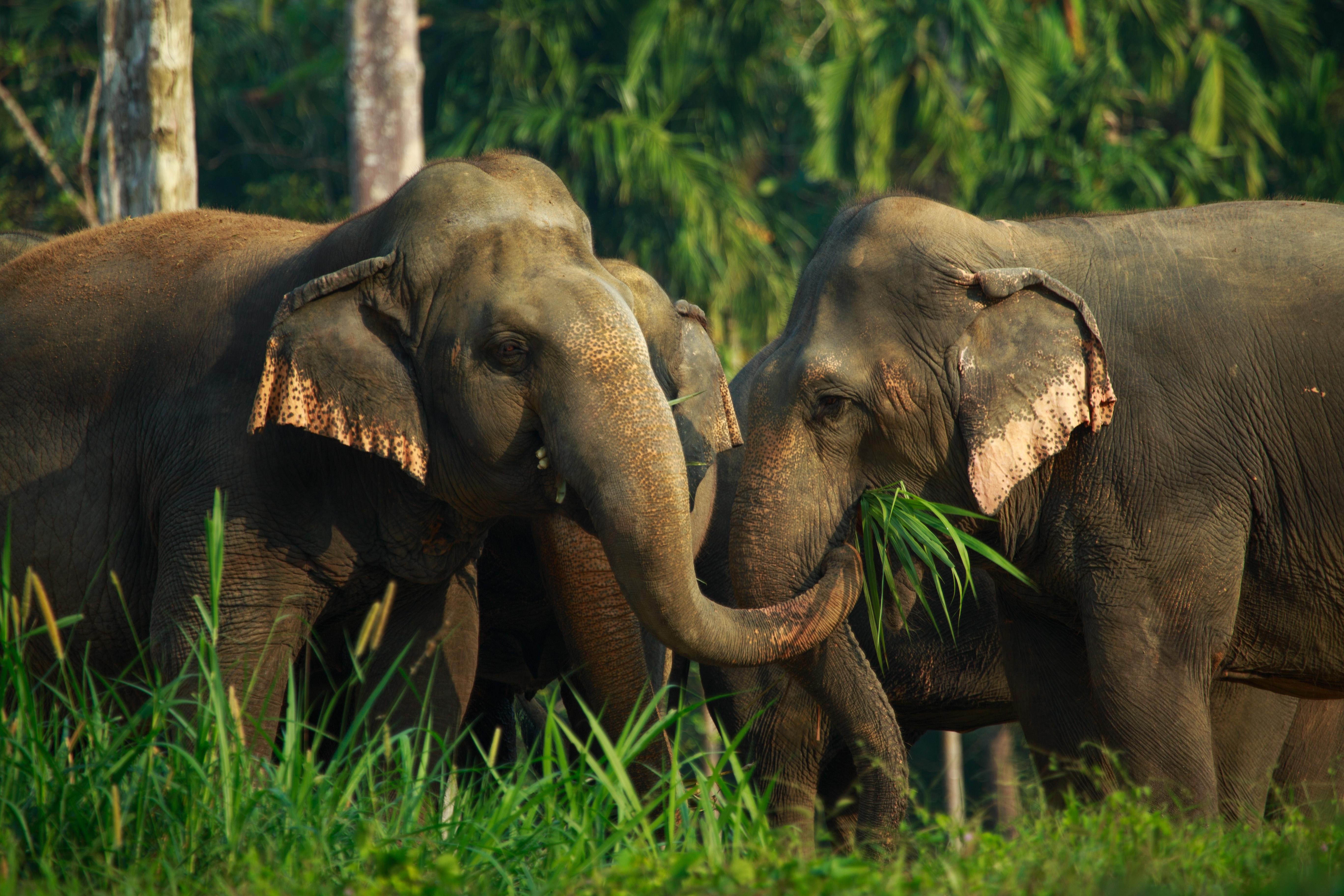 Elephant Hills et jungel og elefanteventyr!